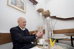 Wiedeń Cat Cafe Neco 2