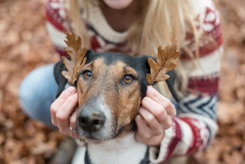 bezpieczeństwo psa w lesie