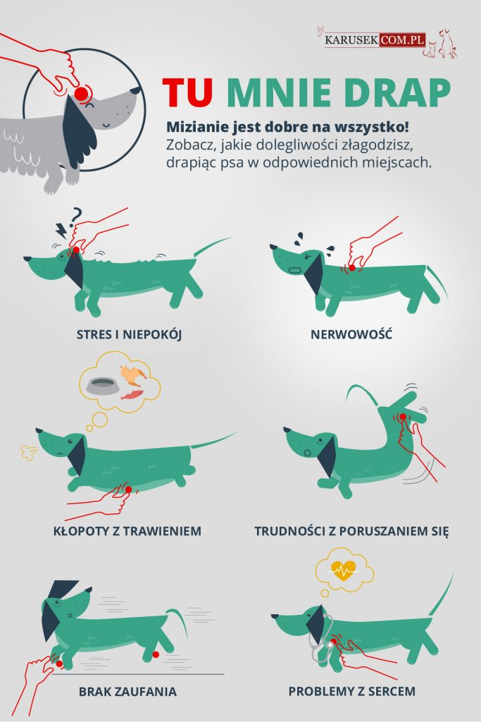 Infografika o drapaniu psów